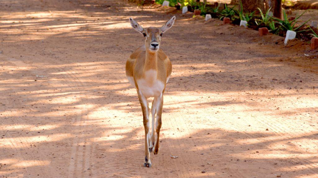 Deer Park Sarnath